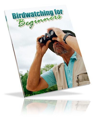 birdwatchingbeg