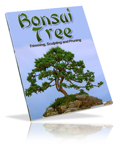 bonsaitree