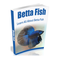 bettafish200