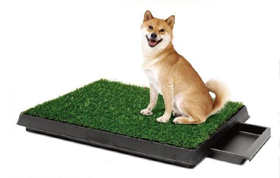 dogpottytrain
